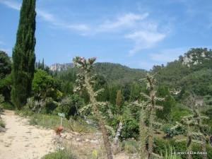 Jardin d' Elie