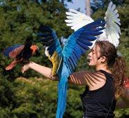 Parc de Branféré spectacle d'oiseaux
