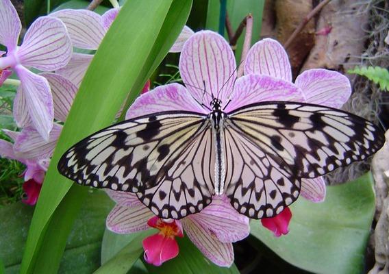 Jardin aux Papillons
