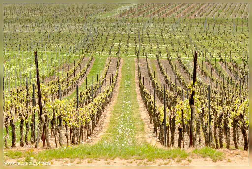 Route des Vins Alsace