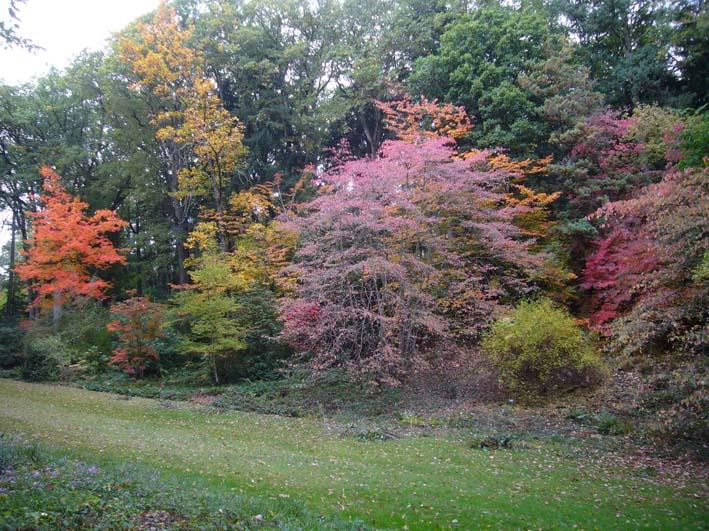 Arboretum de la Fosse